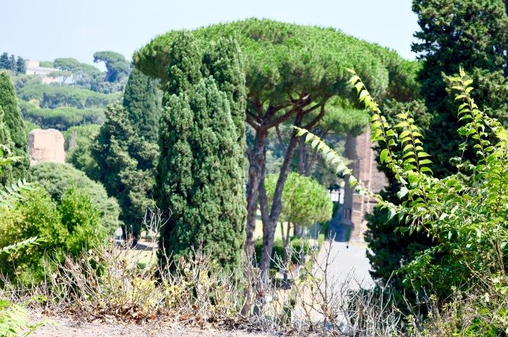 Il Complesso delle Terme di Caracalla viste da San Saba
